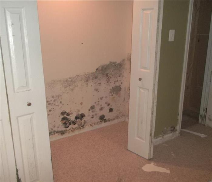 Mold Remediation Does your Pottstown, Collegeville, Phoenixville, Telford, Harleysville home have a mold problem ?